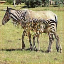 A horse transformed to a zebra by the generative adversarial network CycleGAN
